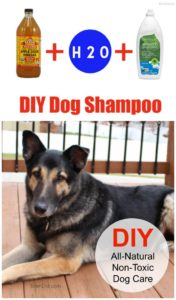 DIY dog shampoo collage