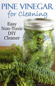 Like the smell of pine cleaners but don't like chemicals? Evergreen Scented Vinegar is an Easy DIY Cleaner made from fresh evergreen needles and vinegar. Get the full directions and learn which evergreen work best in the cleaner! Green cleaning DIY