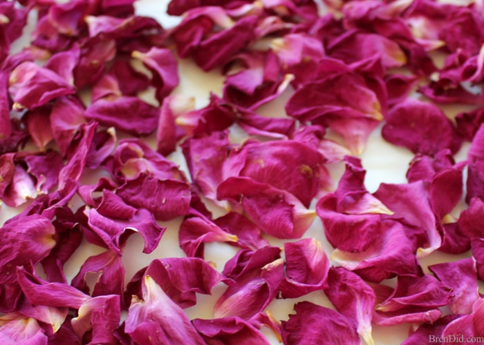 How To Dry Rose Petals At Home With No Special Supplies Bren Did
