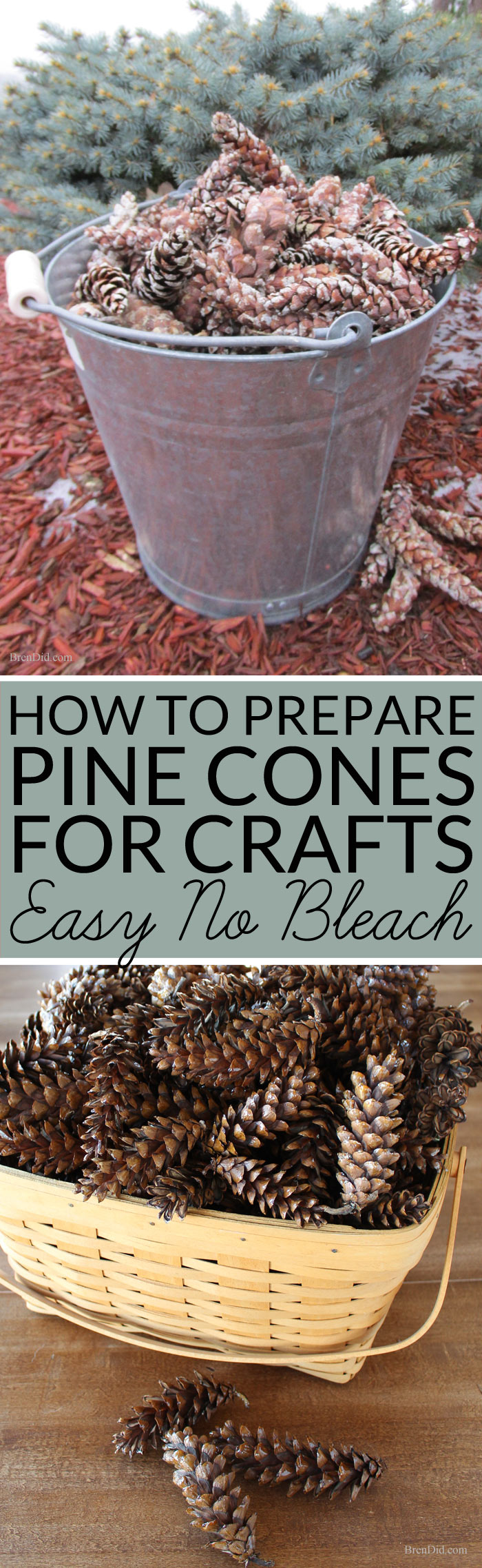 Pine cones collected outdoors can bring mold, mildew or bugs into your home unless they are correctly prepared for indoor use. Learn how to prepare pine cones for crafts. No bleach. All-natural. Free!