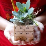 18 Beautiful (and Actually Doable) Plant Gifts for Teachers