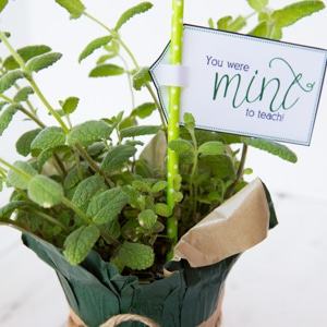 Mint to teach gift tags
