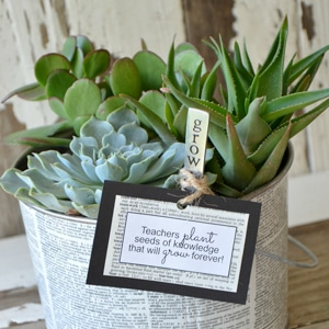decoupaged succulent garden
