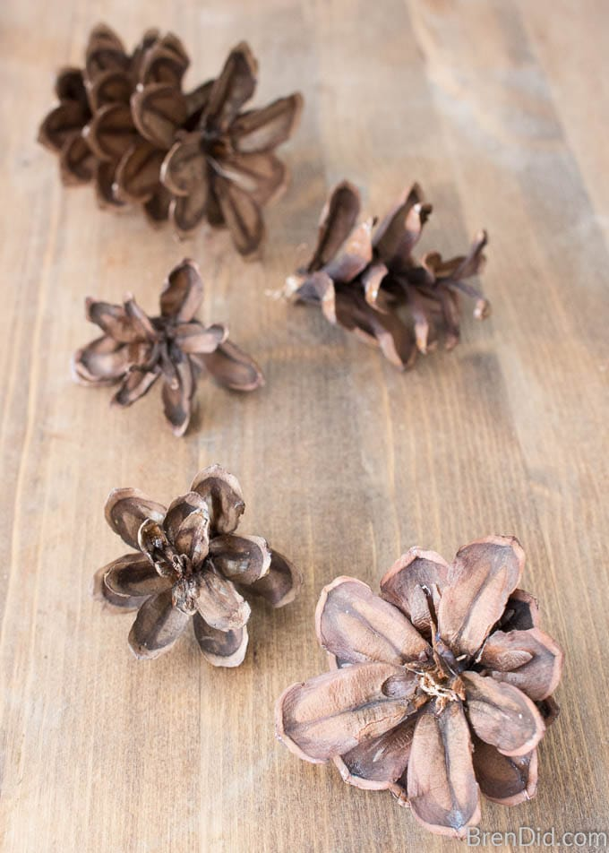 Cut remaining pinecones into tops (about 2-3 inches long) and florets