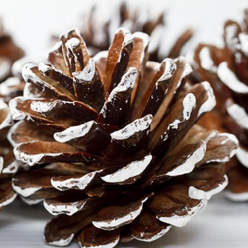 snow covered pine cones liquid paper