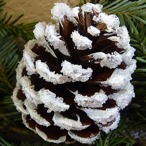 snow covered pine cones modge podge paint Epsom salts
