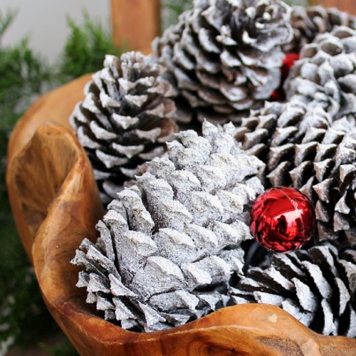 snow covered pine cones heavy spray snow