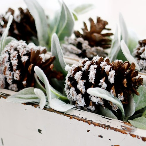 snow covered pine cones bagged snow