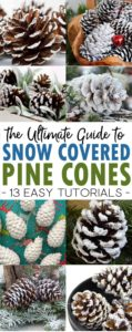 snow covered pine cones pin