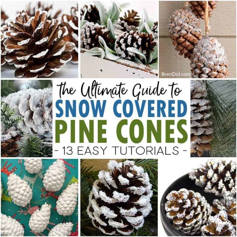 the ultimate guide snow covered pine cones square
